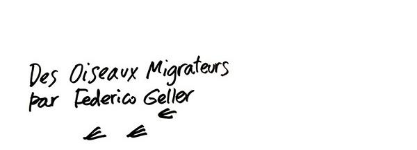 Oiseaux_Migrateurs_03