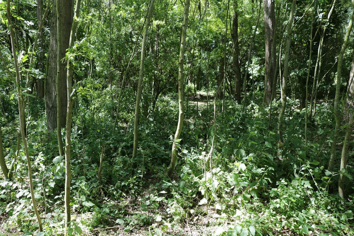 Le bois du Puythouk où dorment les exilés.